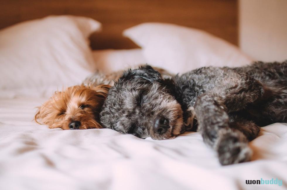 犬が咳やクシャミをする。これって風邪?
