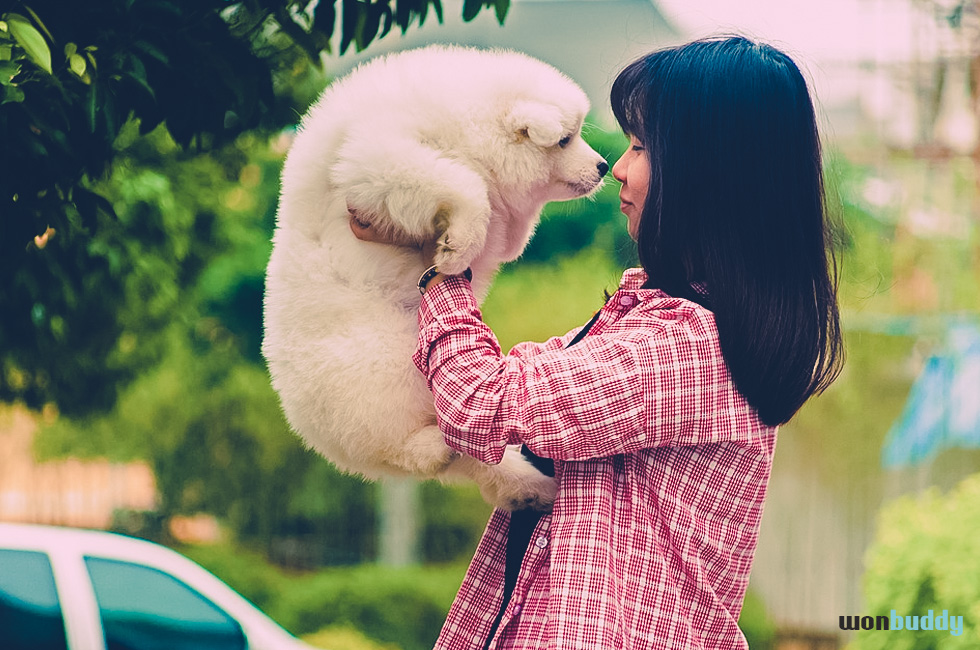 犬を飼う前の心構え
