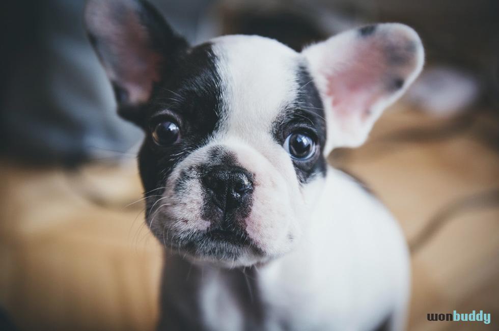 愛犬の耳の動きから読み解く心理(感情)状況