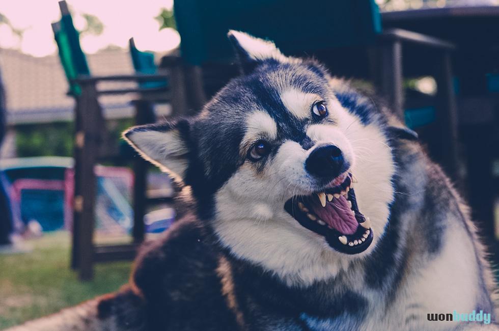 犬の方が飼い主より偉い? 気をつけて!アルファシンドローム