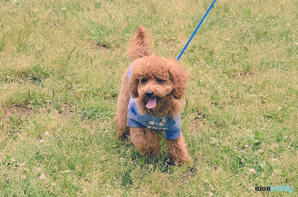 愛犬の散歩中に首輪が外れた!ポーロが救った愛犬の命。