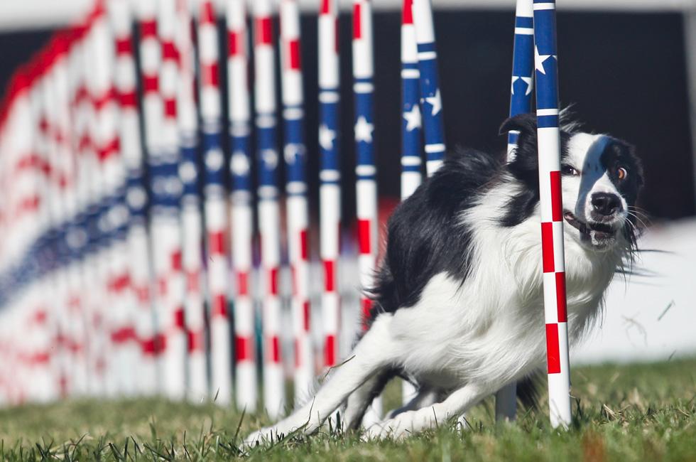 リオ五輪いよいよ開幕!ところで犬にもオリンピックがあるんです。