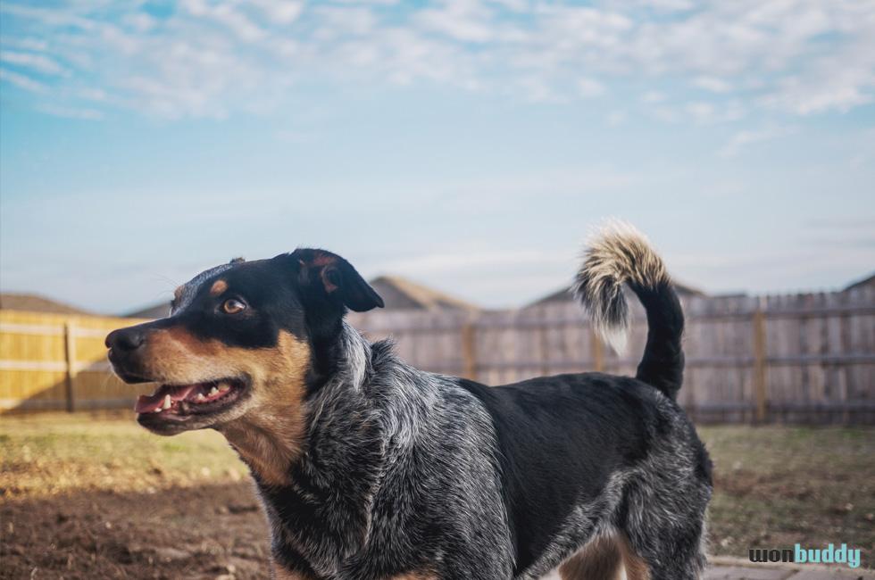 喜怒哀楽を表すコミュニケーションツール。尻尾の動きから読む愛犬の感情
