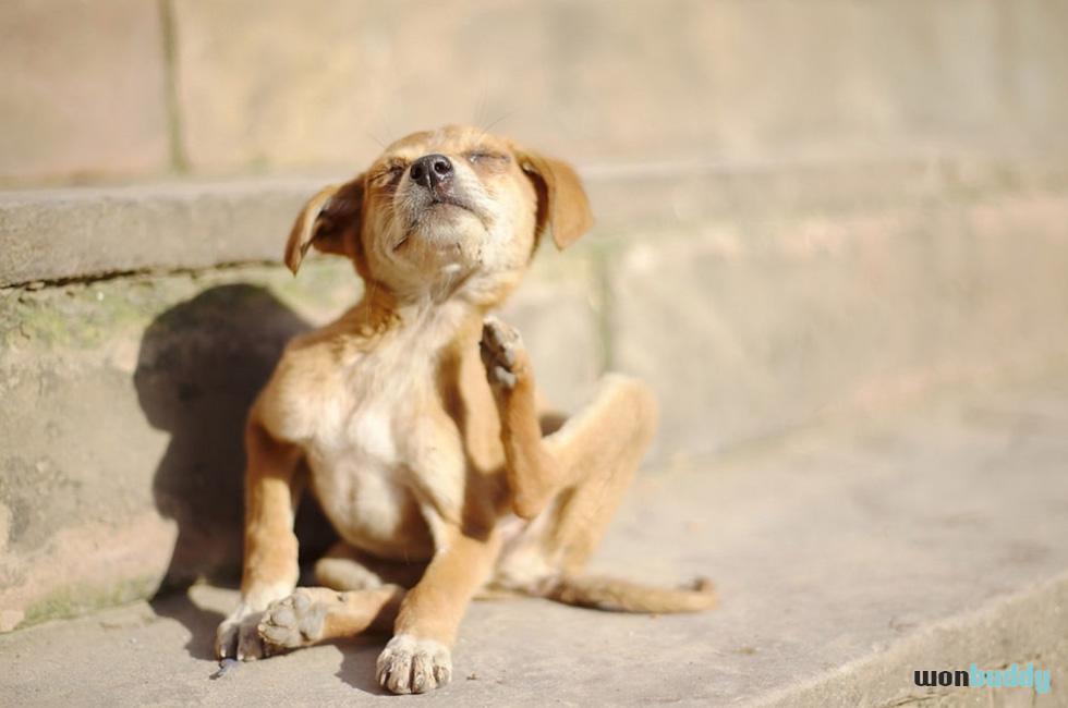 この時期盛んなノミの活動と犬の関係
