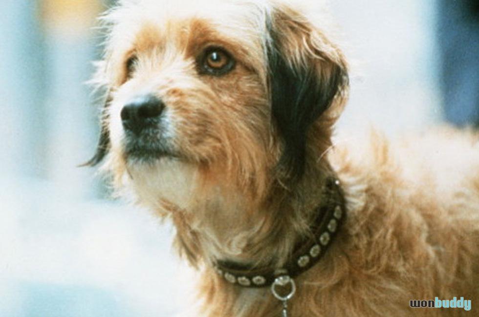 保護犬からハリウッドスターに上り詰めた名優ヒギンス「ベンジー」が救った数百万の犬の命
