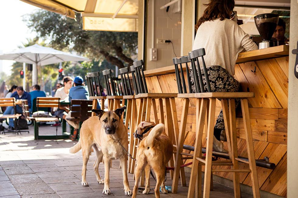 世界一犬に優しい街で犬の日の「犬の祭典」 テルアビブが犬のパラダイスな件