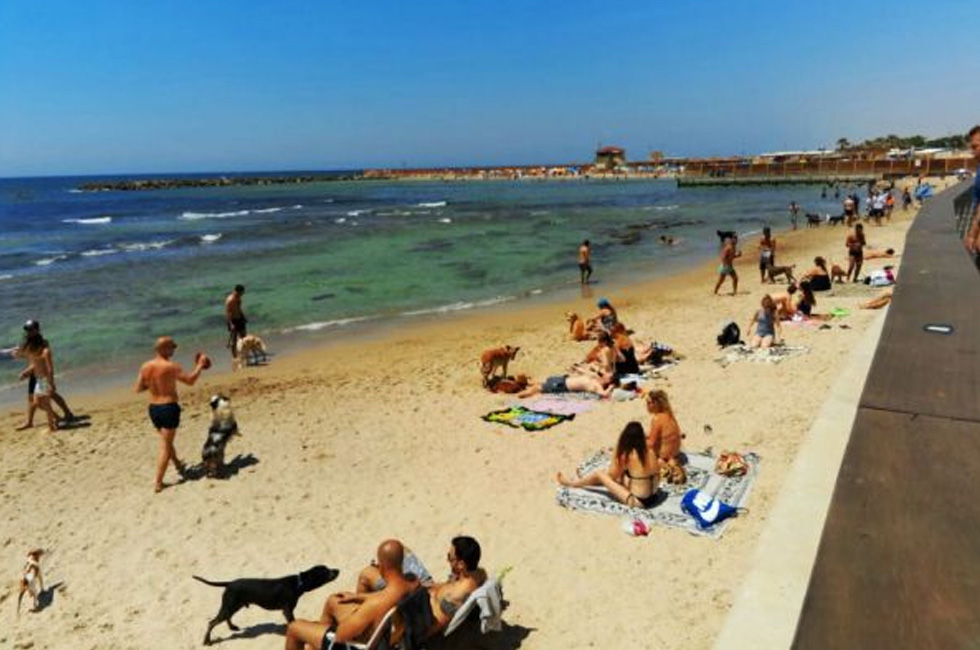 The Dog Beach Tel Aviv by Hariella Farber
