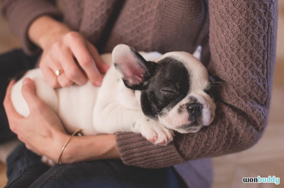 しつけの前にしたい、あなたが愛犬の母である為の社会的教育