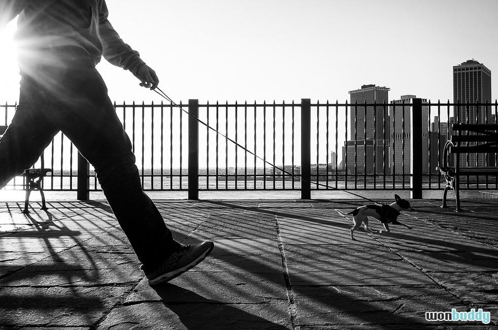 犬の散歩は右側通行?左側通行? 大切なのは犬の安全。