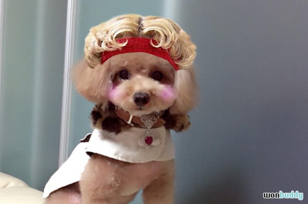 Instagramで話題!愛犬をりゅうちぇる風にする「#我が家のりゅうちぇる」 素材付き
