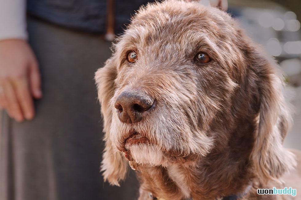 犬の寿命ここ25年で1.5倍に。平均寿命イヌ13歳とこれからの問題。