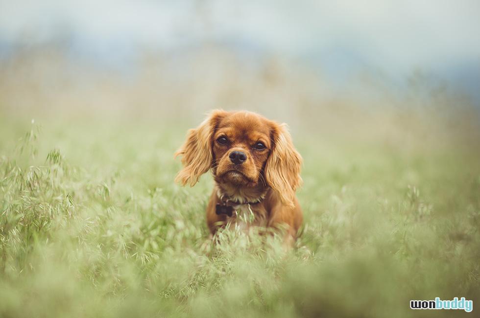 愛犬を亡くした悲しみを乗り切る方法と、それからの生き方。