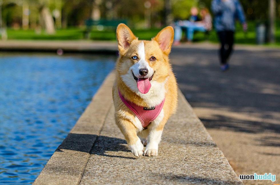 犬にとって舌は健康のバロメーター 色で分かる健康状態と舐める訳。