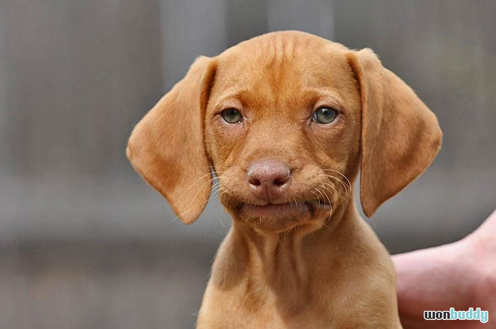 犬にも認知症ってある?高齢犬20%が認知症疑い。