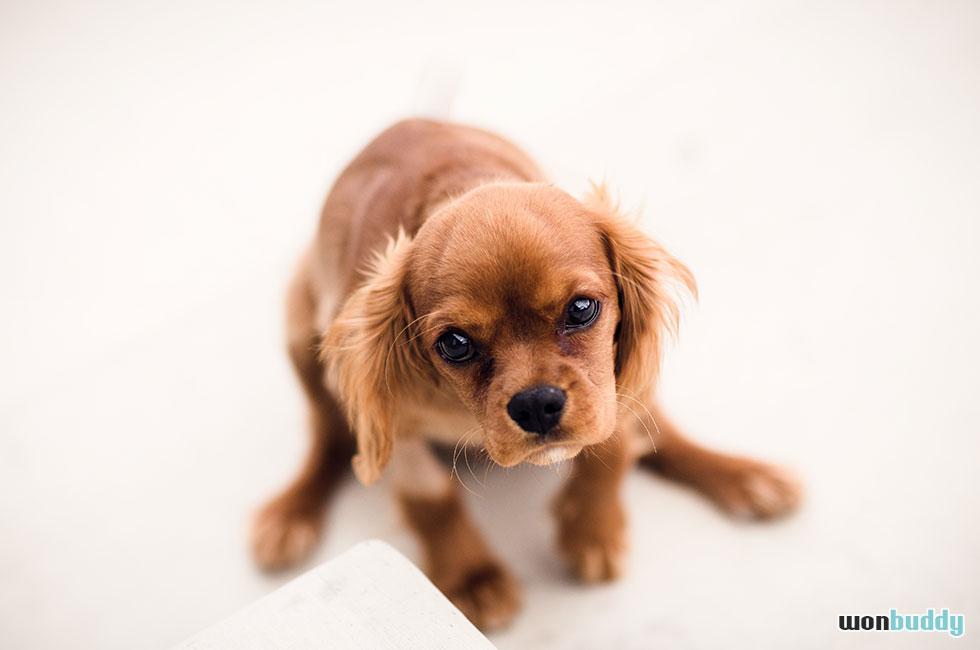 犬が吐いた時って背中をさする?犬が吐く理由と対処法。