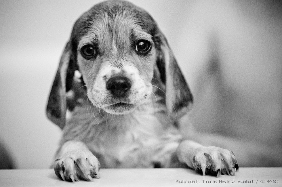 高齢で歩けなくなった犬、足湯で歩けるように。