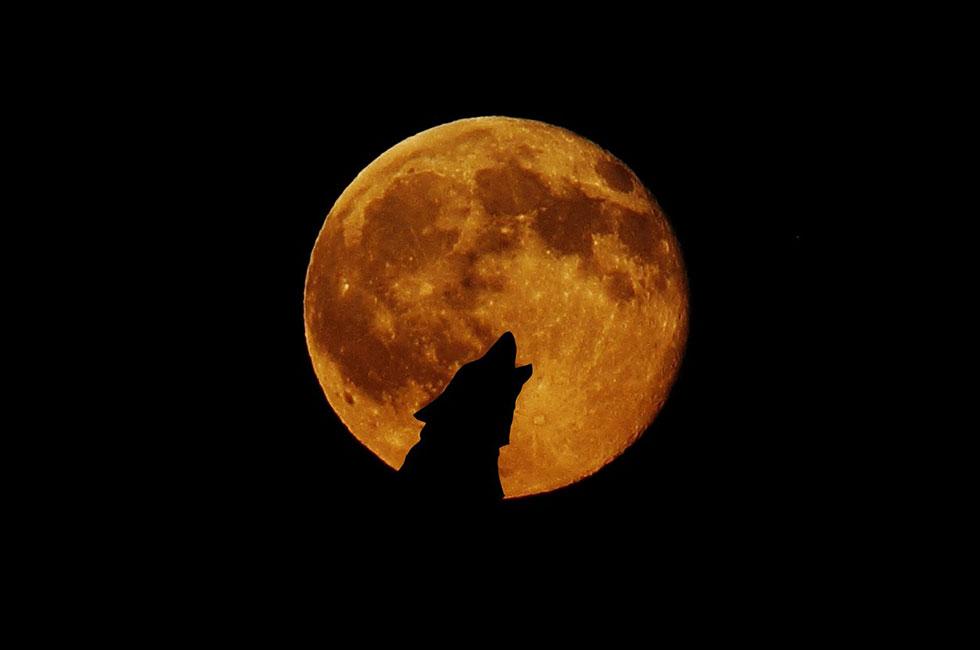 高齢犬の夜鳴き(夜泣き)の原因と対処法は?