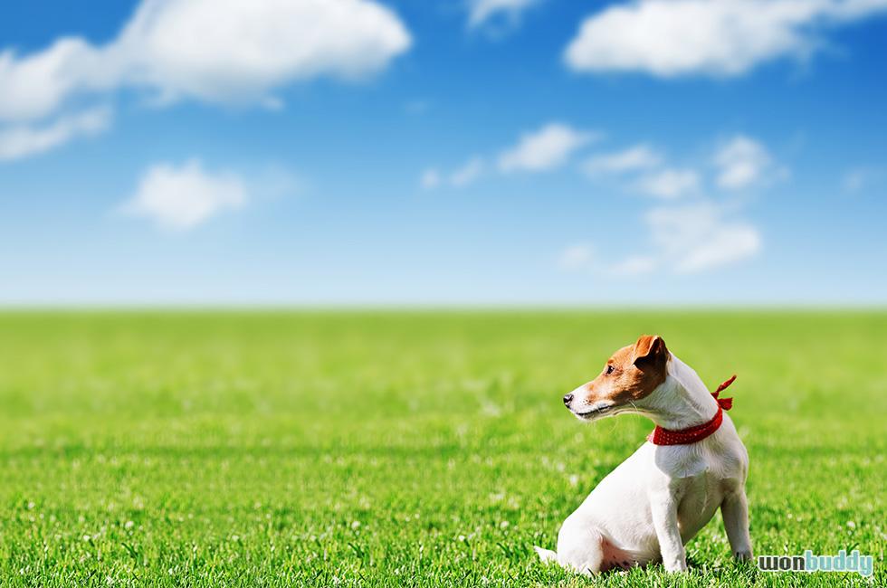 犬にも花粉症ってあるの? 注意したい、くしゃみの連発。