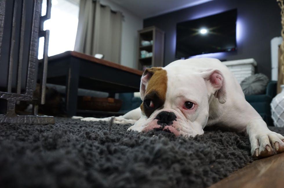 犬の適正体重は?痩せすぎ肥満の健康リスクと対策