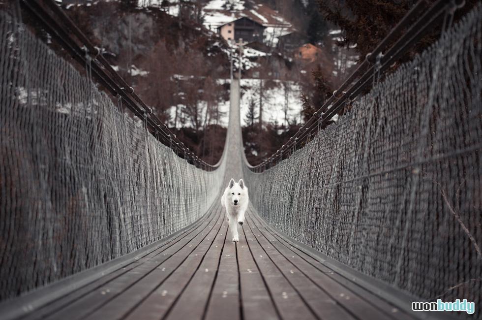 愛犬が迷子になったら!? まず飼い主がやるべきことは?