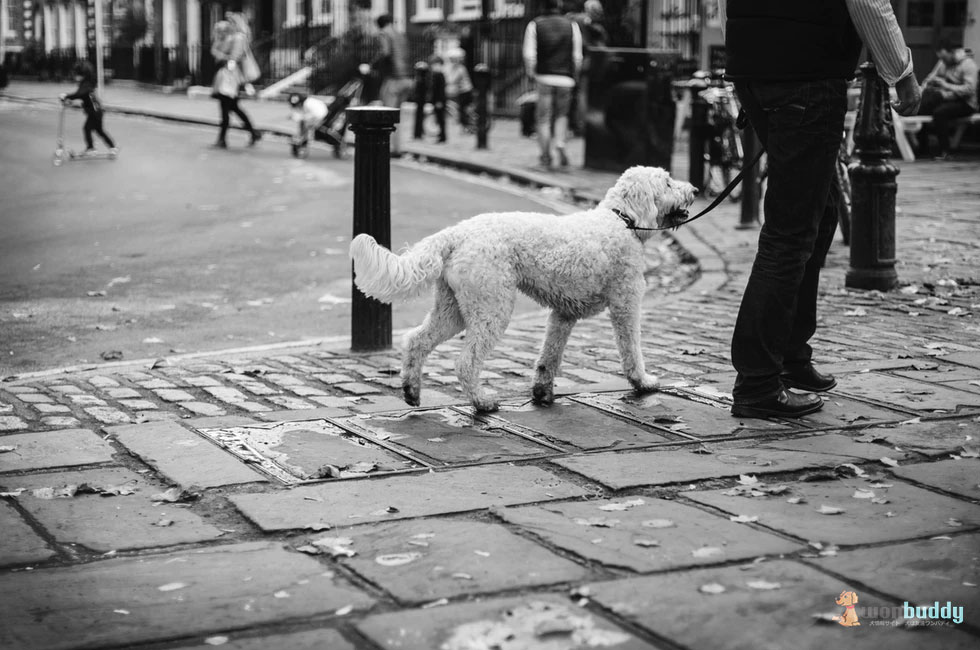老犬と散歩するときに買い主が注意すべきこと