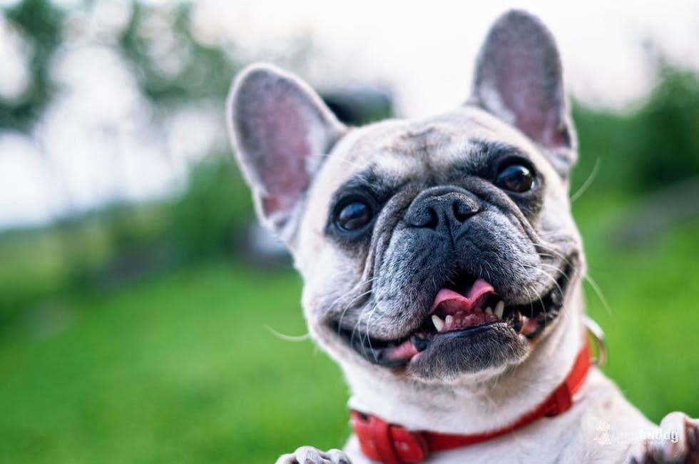 侮れない歯周病の恐怖…老犬を守るためにできること