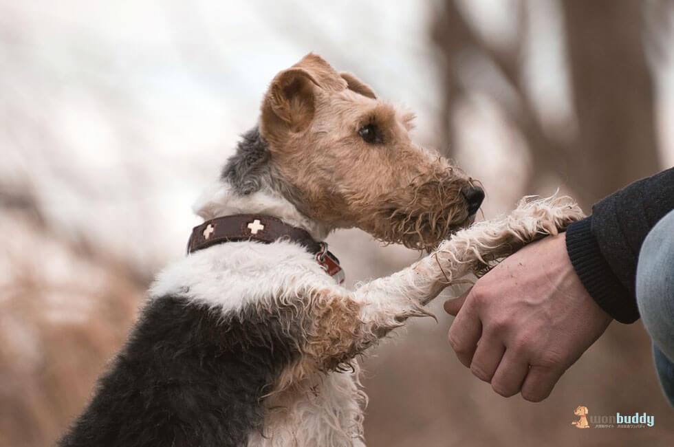 今のうちに覚えておきたい老犬との遊び方