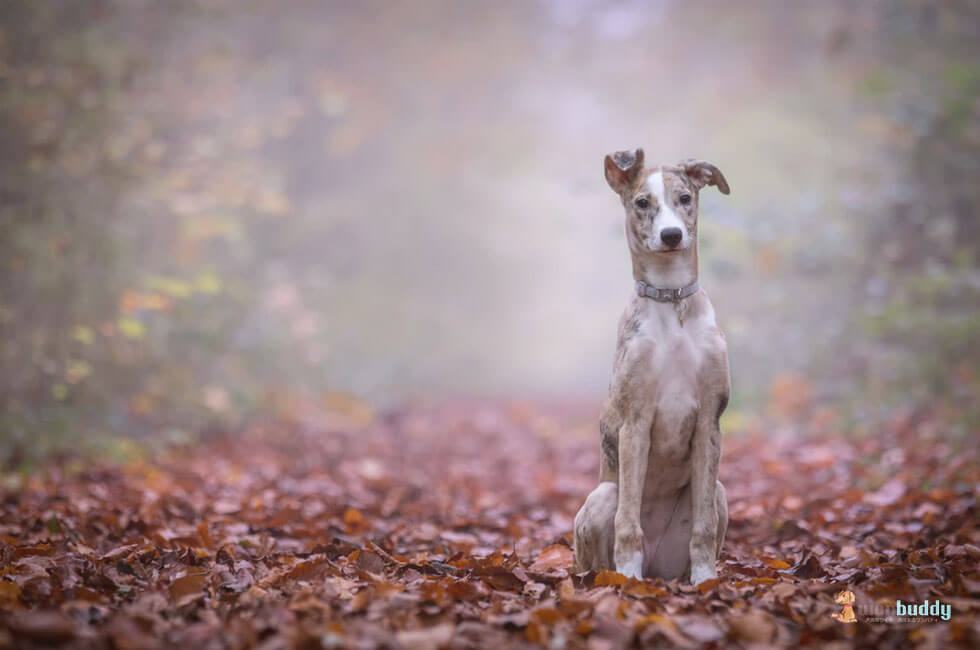 老犬の認知症とはどう向き合うべきか…正しい予防法も押さえよう