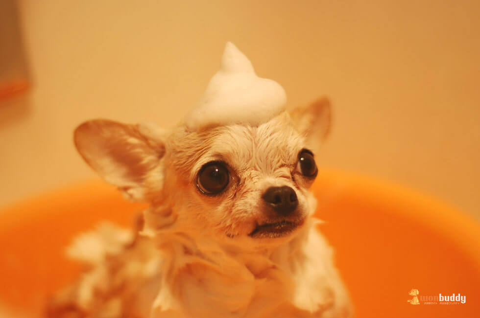 犬の入浴(シャンプー)、老犬を入浴させる際に心がけたいこと