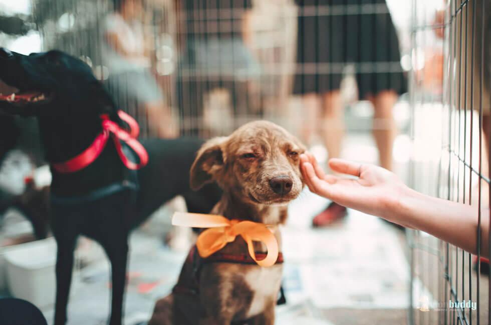 飼い主なら知っておきたい「動物愛護法」現行の課題と2019年改正に向けて