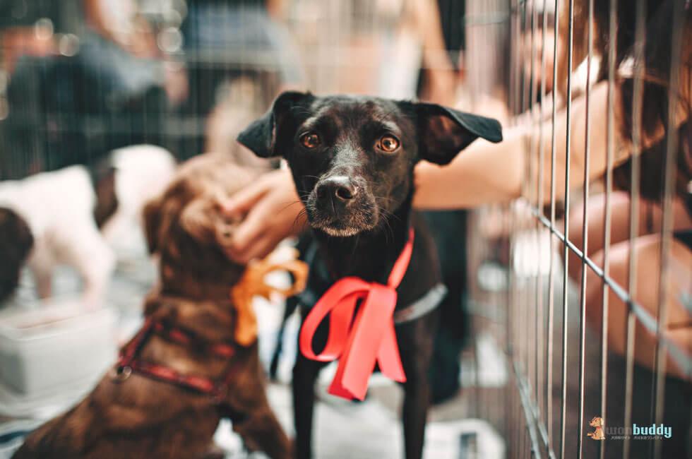 いま保護犬の里親が密かな人気。保護犬の里親になる方法と条件